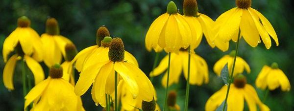 Jesienna pielęgnacja roślin doniczkowych
