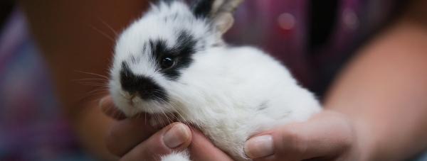 Zakaz testowania kosmetyków na zwierzętach