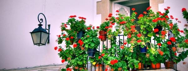 Jakie kwiaty hodować na balkonie?