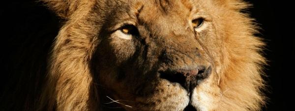 Lwia zmarszczka to nie koniec świata!