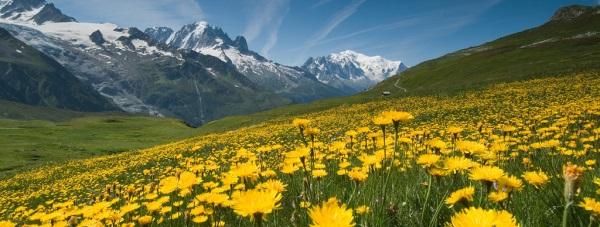 Wiosenna alergia - pylący problem Polek