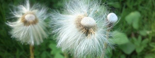 Naturalne sposoby leczenia alergii