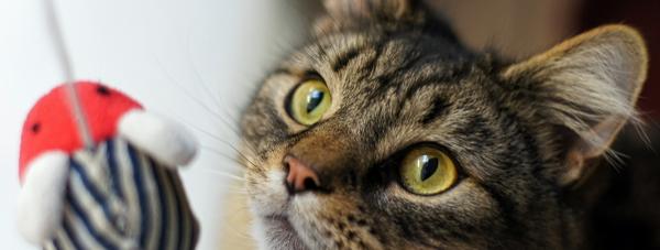 Czy kot w domu stwarza zagrożenie dla zdrowia?