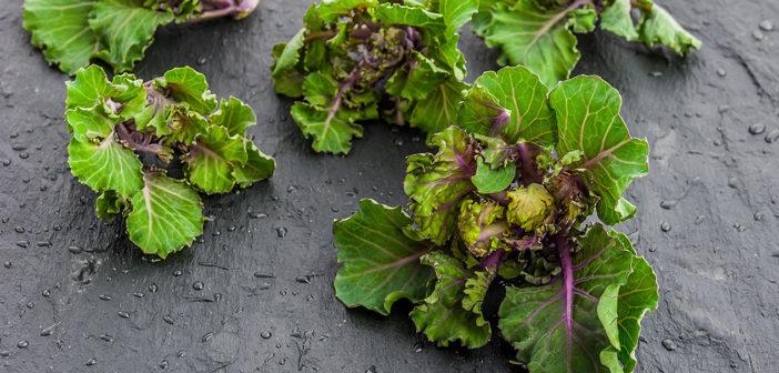 Kalerosse - nowe warzywowpolskiej kuchni