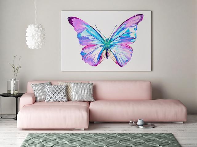 obrazy motyle redro